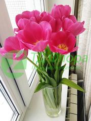 Тюльпаны оптом от 25 р. с доставкой в Читу!
